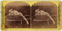 Bertie -- resting [front]