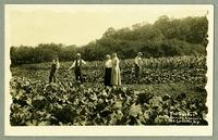 The Garden, North Family Shakers, Mt. Lebanon, N.Y.