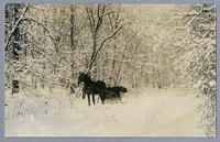 Horse and sleigh in winter scene, printed on post card stock